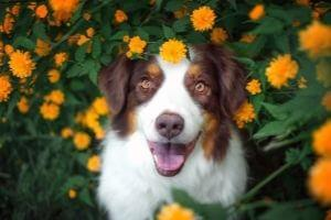 spring dog flea and tick prevention